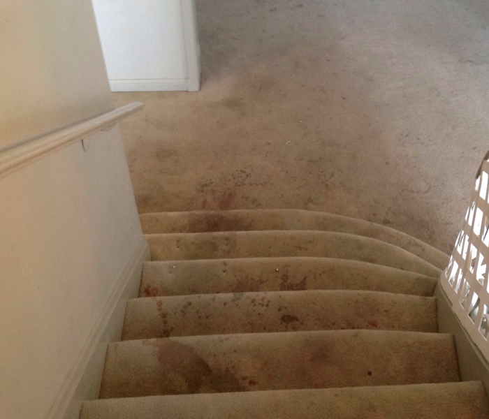 Filthy carpet in Charleston, SC  Before