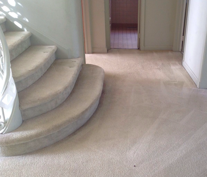 Filthy carpet in Charleston, SC  After